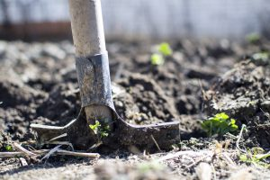Sodininkystės sezonas: kodėl naudinga sveikatai?