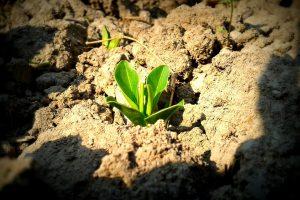 75 proc. šalies dirvožemio balansuoja ant degradavimo ribos