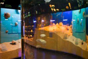 Atidaromas atnaujintas Jūrų muziejaus akvariumas