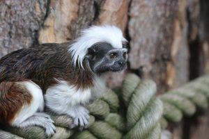 Zoologijos sodas kviečia į 80-ąjį gimtadienį (šventės programa)