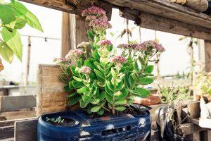 Kambarinių augalų priežiūra vasarą: ką būtina žinoti?