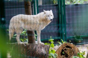 Gyvenimas per karščius Lietuvos zoologijos sode: kam sunkiausia?