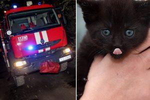 Kauno ugniagesiai vyko gelbėti automobilyje įstrigusio kačiuko