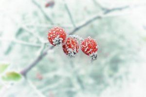Kalėdos ir šiemet nebus tikroji žiemos šventė