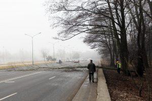 Dėl medžių šalinimo darbų Manto gatvėje - eismo apribojamai