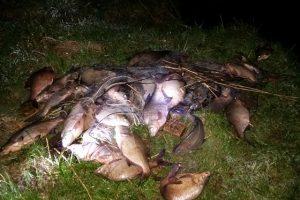 Brakonierių padaryta žala gamtai – 11 tūkst. eurų