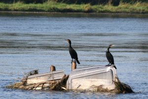 Kuršių nerijos paukščio rinkimai sužlugo?