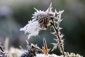 Orai: klaipėdiečiai sulauks šalnų