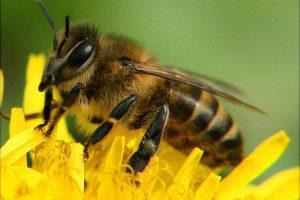 Ugniagesiai vyko vaikų darželio gelbėti nuo bičių spiečiaus