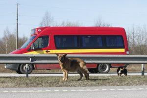 Greitkelyje – šunų guolis