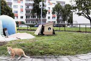 Kačių nameliai – konflikto epicentre?