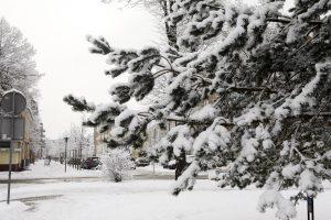 Žiema ir džiugins, ir vers gūžtis