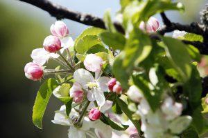 Pagaliau – tikras pavasaris