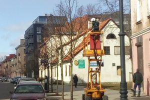 Miesto medžiams – speciali priežiūra