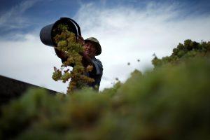 Gruzija vyno eksportą 2016-aisiais padidino trečdaliu