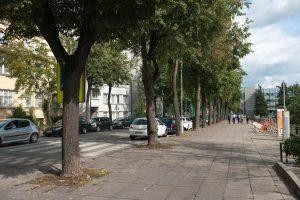 Ar pjauti medžius, spręs trys ekspertai