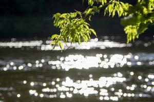 Tragiškos atostogos: Kaišiadorių rajone nuskendo du vaikai