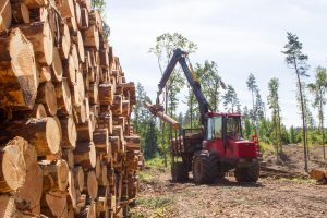 Neteisėtų miško kirtimų – mažiau