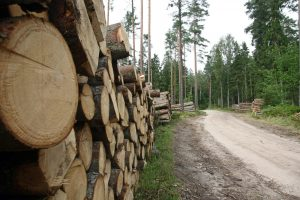 Nauja valstybinės medienos pardavimo tvarka toliau kelia ginčų