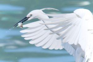Rudeninė paukščių migracija – su staigmenomis
