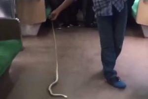 Indonezietis traukinyje plikomis rankomis nugalabijo gyvatę