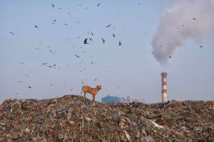 Indijos miestai – labiausiai užteršti pasaulyje