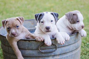 Prekiaujant gyvūnais augintiniais būtina laikytis reikalavimų