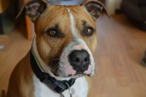 Dar vienas mirtinas šuns užpuolimas Vokietijoje: sudraskytas kūdikis