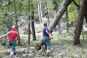 Medžių pjovėjai elektros tiekimą šiemet nutraukė 15 tūkst. vartotojų