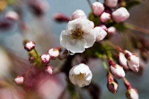 Nors pamažu, bet pavasaris ateina