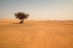 JT: išgelbėta tūkstančiai Nigerio dykumoje paliktų migrantų