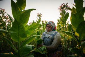 PSO: tabakas kelia grėsmę planetos gerovei