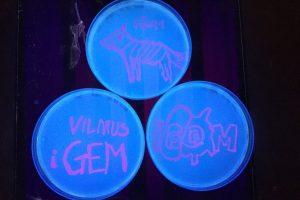 Mainų laboratorija kviečia į bakterijų dažymo dirbtuves
