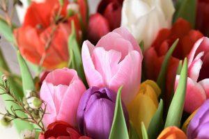 Tulpių keliais: vežėjai suka ratus, bet gėlės moteris pasiekia laiku