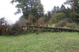 Pjaunant mišką žuvo žmogus