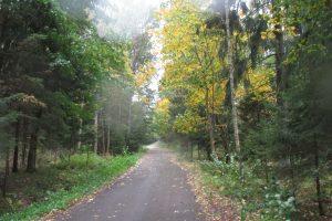 Kokį likusį rudenį žada sinoptikai