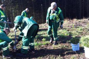 Žalias Vilnius: šeštadienį pasodinta 1 000 beržų ir pušelių sodinukų