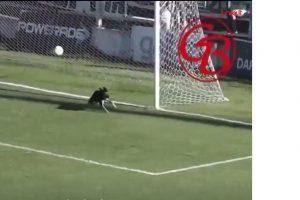 Kuriozas: šuo išgelbėjo komandą nuo įvarčio