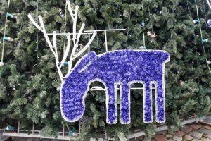 Kaunas jau ieško, kas puoš kalėdinę eglę