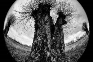Meniškas pasakojimas apie medžius