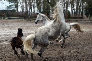 Žirgų varžybų dalyvis: čia viskas, kaip po karo