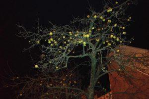 P. Lukšio gatvėje obelis vis dar pasipuošusi obuoliais