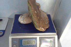 Klaipėdietis rado įspūdingo dydžio baravyką