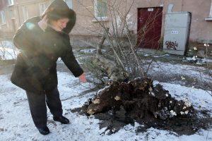 Uostamiestyje medžiai verčia drebėti