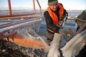Rusnę kausto šaltis ir vanduo