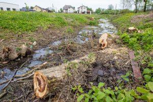 Aleksotiškiai piktinasi: nupjovus medžius, pradingo paukščiai