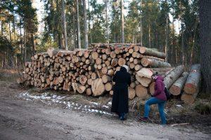 Kurortinės Kulautuvos miško genocidas: kas iš jo pelnosi?