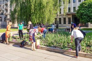Kodėl moterys apspito Kauno savivaldybės tulpes?