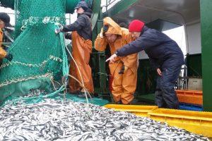 Baltijoje – žuvų akustiniai tyrimai