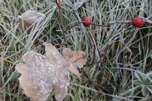 Griaudėjo – laukti šiltos žiemos?